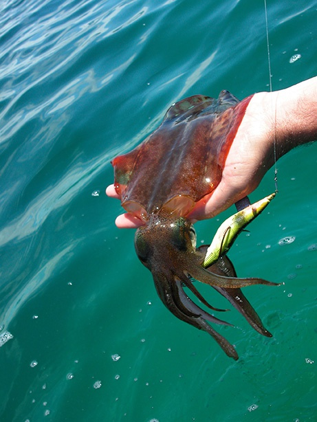 Squid on jig