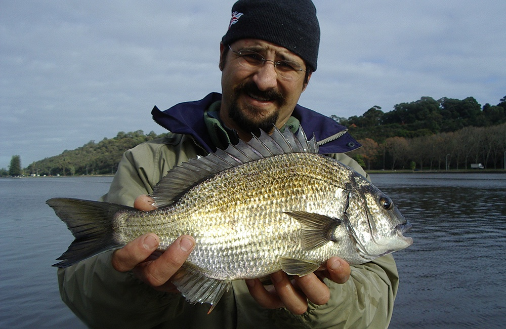 Swan river winter bream