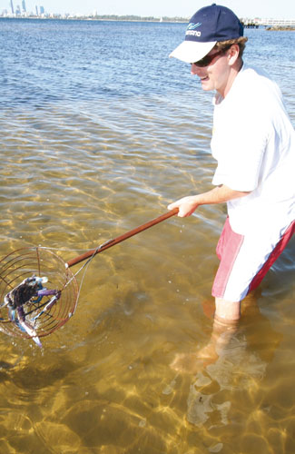 How to catch a crab with a scoop net 3