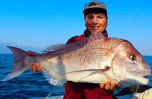 South west WA pink snapper