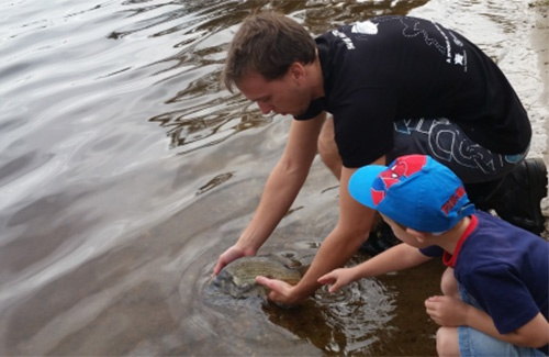 Tagged bream being released