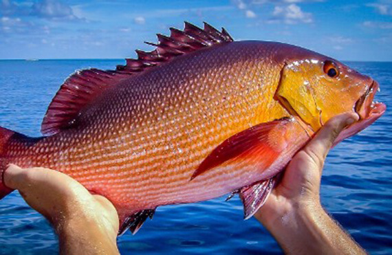 Exmouth red bass