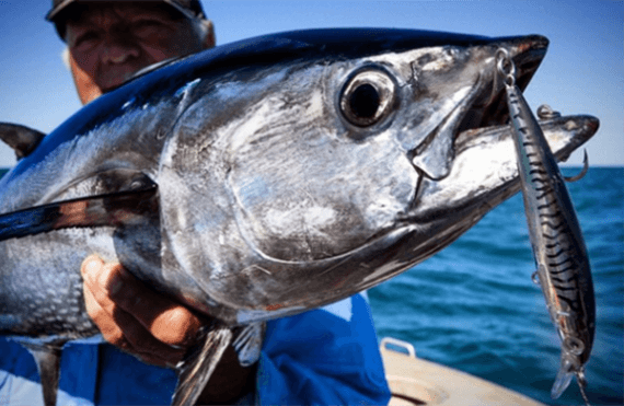 Broome tuna