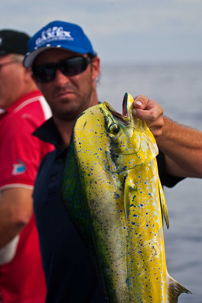 Exmouth dolphinfish