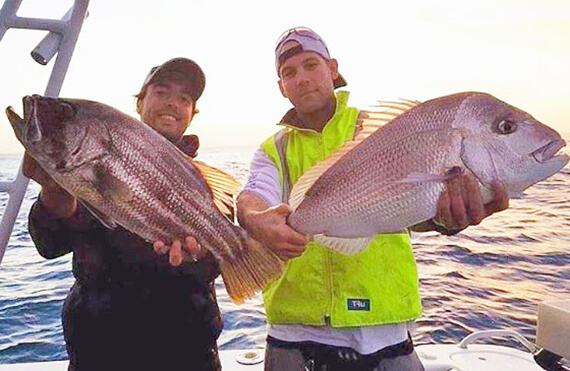 Perth metro dhufish and pink snapper