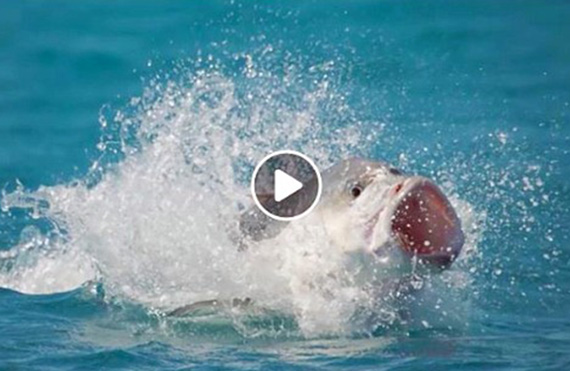 Exmouth video