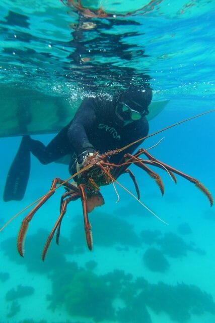 Jumbo cray caught off Rottnest
