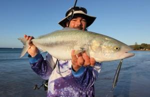 West Australian Salmon