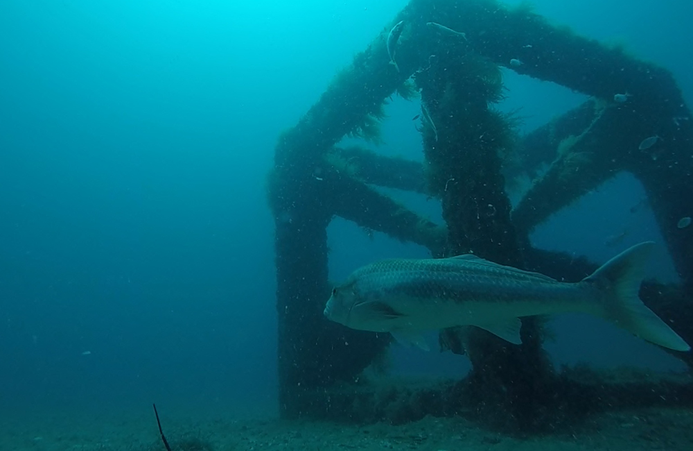 Artificial reef vision