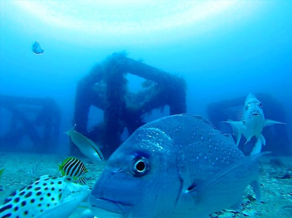 Snapper reef vision