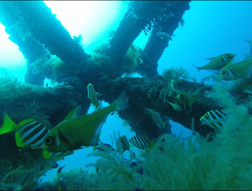 South West Artificial Reef vision