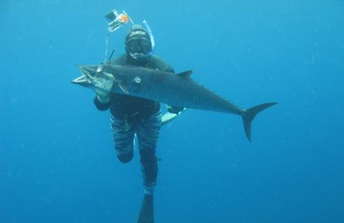 Broome Spanish Mackerel Spearfishing