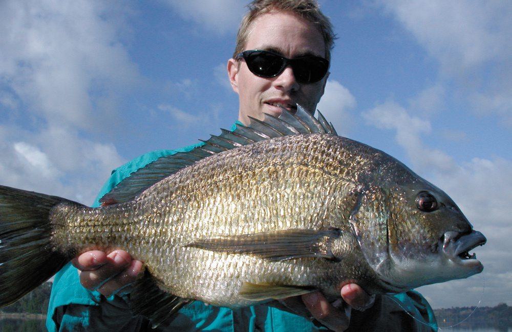 Huge Swan River Winter bream