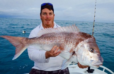 Albany pink snapper