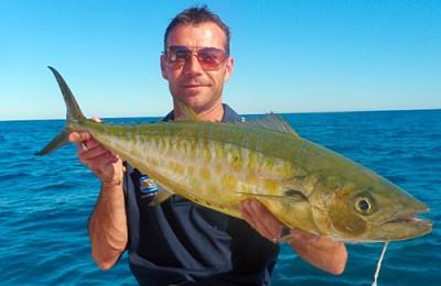 Southwest shark mackerel