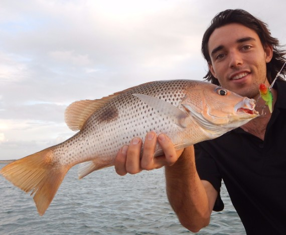 Broome golden snapper