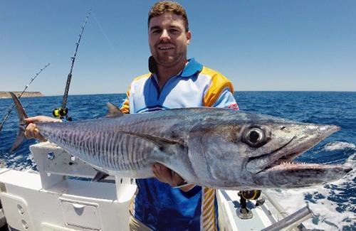 Kalbarri Spanish mackerel