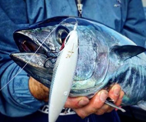 Perth metro southern bluefin tuna