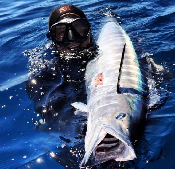 Exmouth wahoo spearfishing