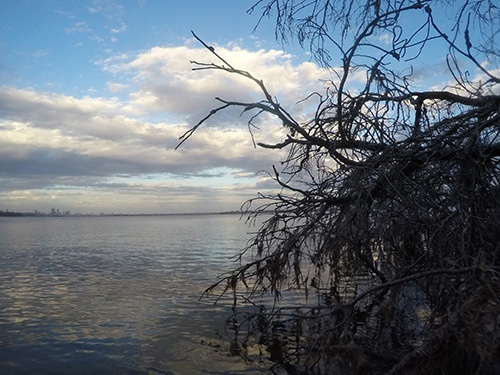Swan River bream habitat