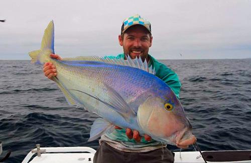 Esperance queenfish
