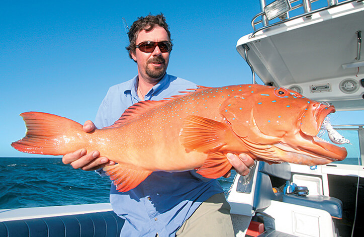 Dirk Hartog coral trout