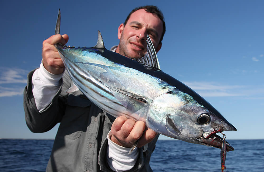 Tuna winter fishing