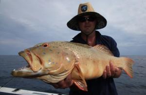 Thevenard coral trout