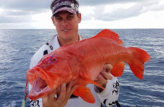 Geraldton coral trout