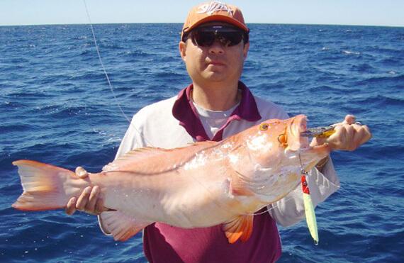 Kalbarri coral trout