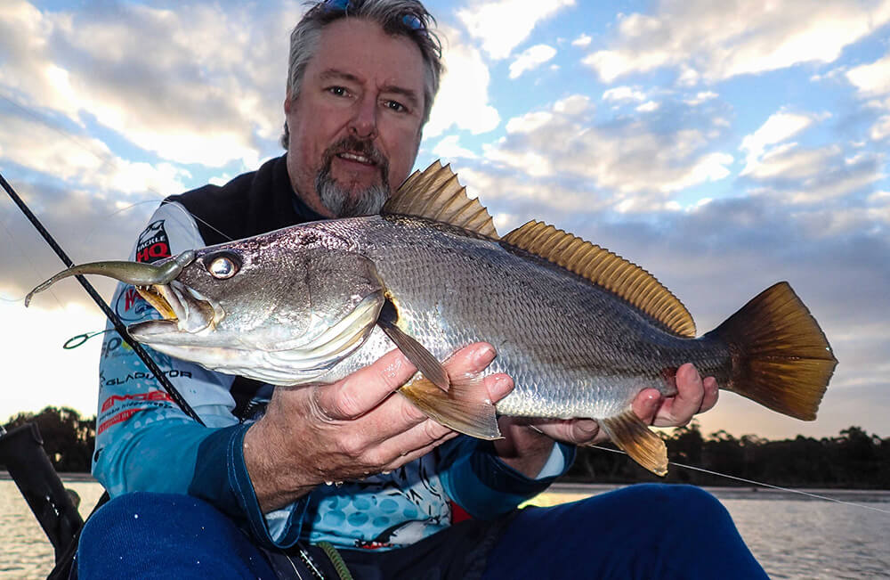 Estuary mulloway on soft plastic