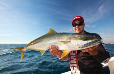 Perth metro yellow tail king fish
