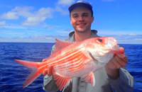 Albany red snapper