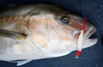 Albany samson fish